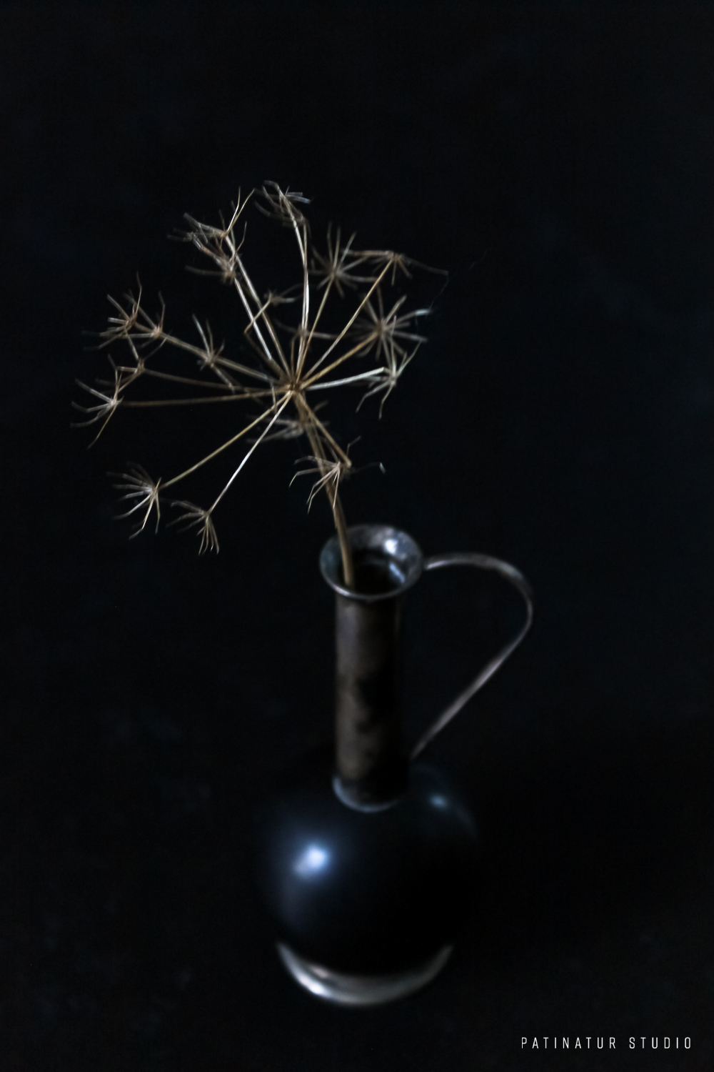 Dark and moody still life photo with umbellifer seedhead in small black vase