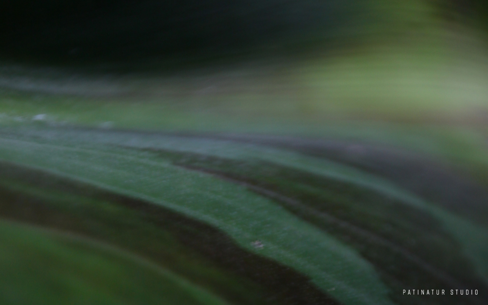 Photo art | Abstract close-up of a banana leaf.