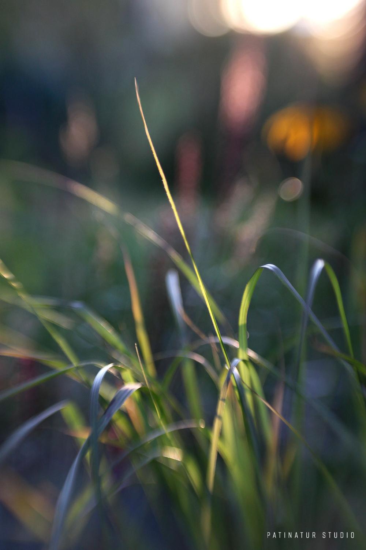 Photo art | Abstract close-up of garden in evening sun.
