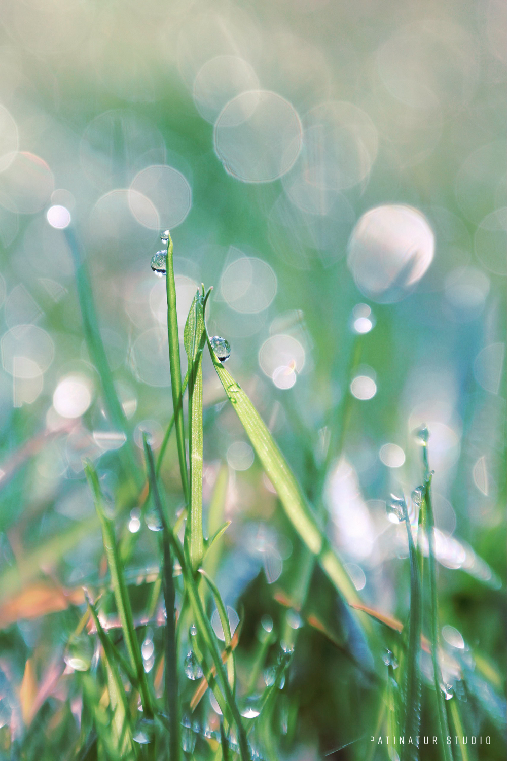Photo art | Abstract close-up of grass with morning dew.