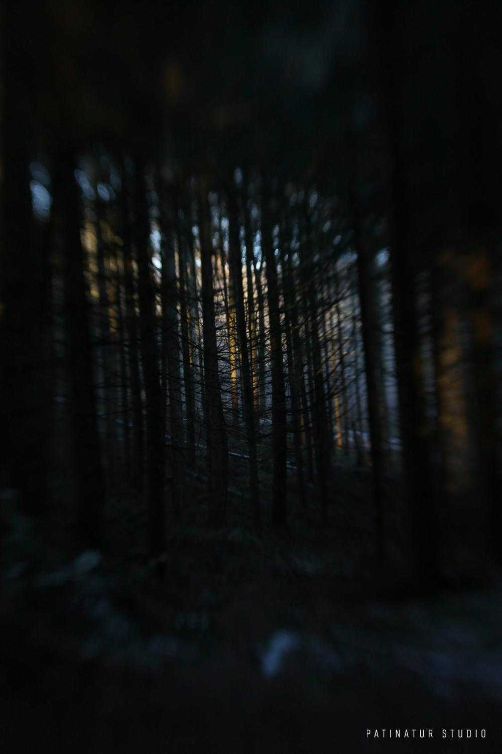 Photo art | Abstract image of a Scandinavian winter forest at sunrise