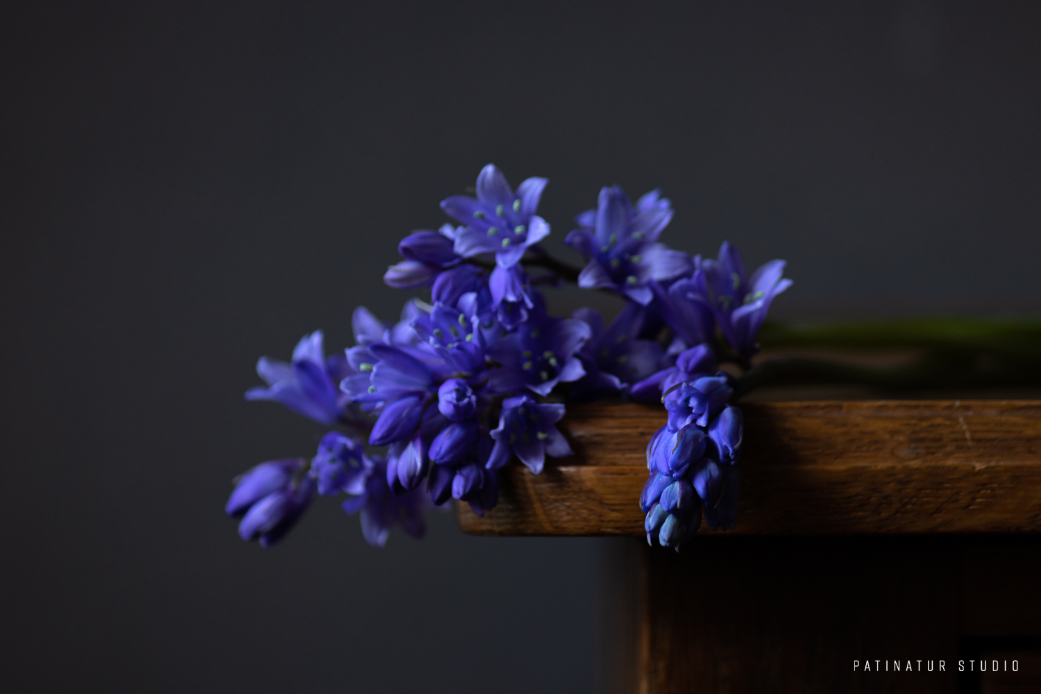 Photo art | Dark and moody floral still life with bluebells