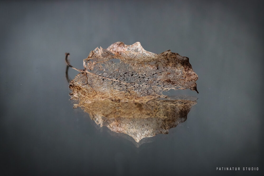 Photo Art | Dark and moody still life with ghost leaf and its reflection