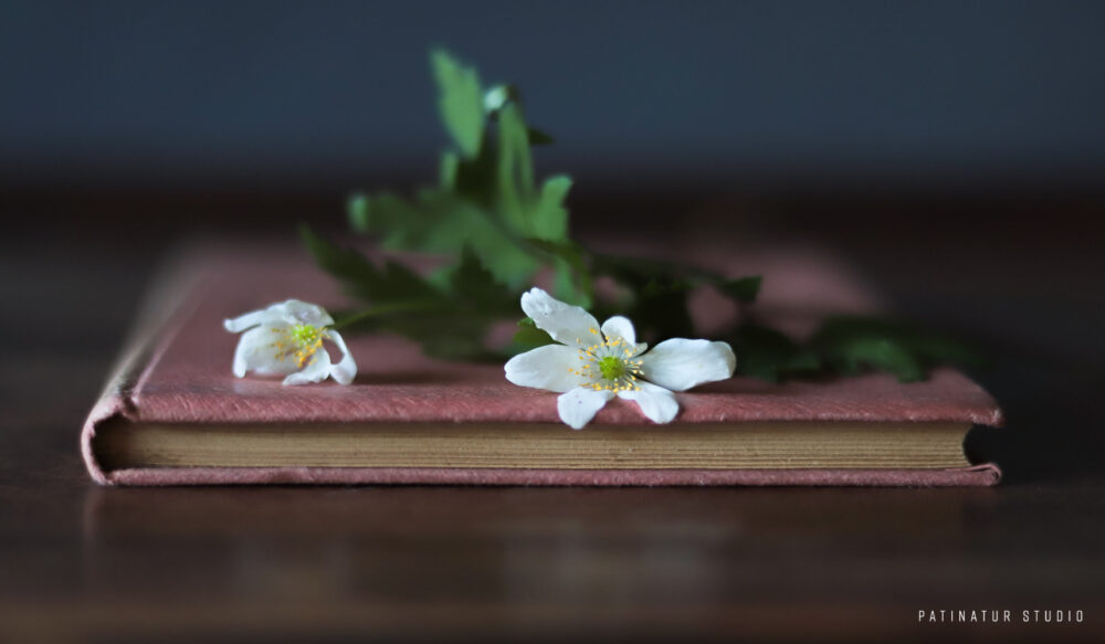 Photo Art | Still life with anemones on vintage book
