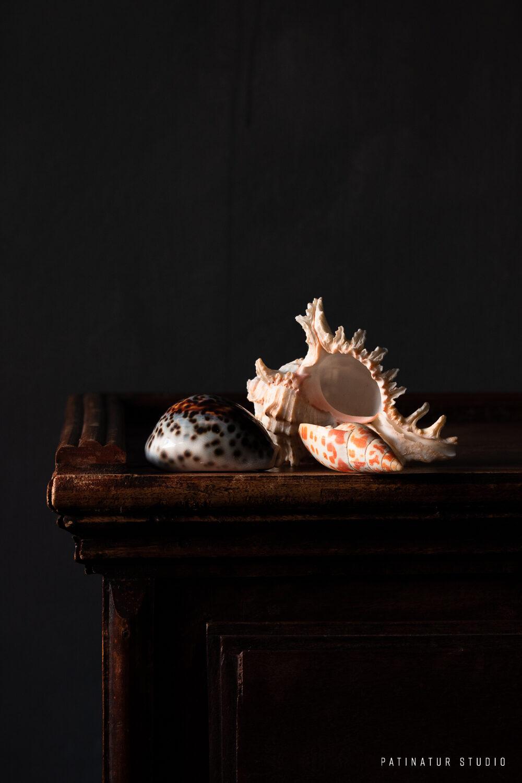 Photo Art | Dark and moody still life with seashells