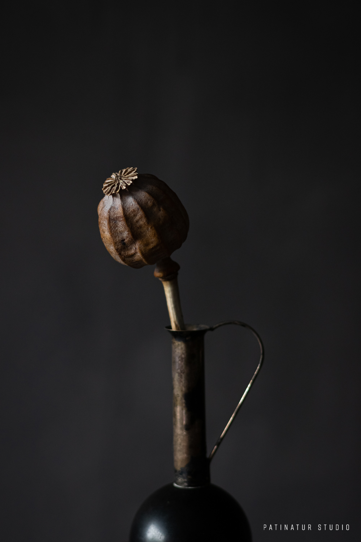 Photo Art | Dark and moody still life with poppy seedhead