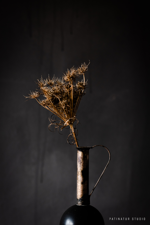 Photo Art | Dark and moody still life with dried seedhead